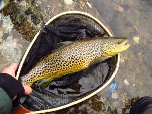 fishing, hunting, Dalarna, Put n Take, fly fishing