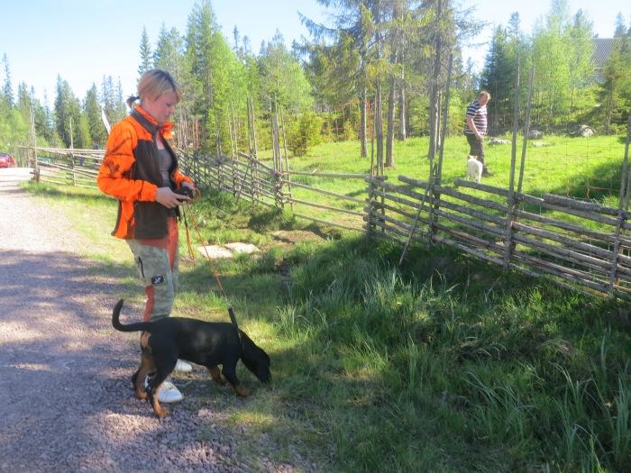 gamefair, vilsdsvishägn, hundträning, jakt, jaktmässa, jonas i sälen game fair, jonas i sälen