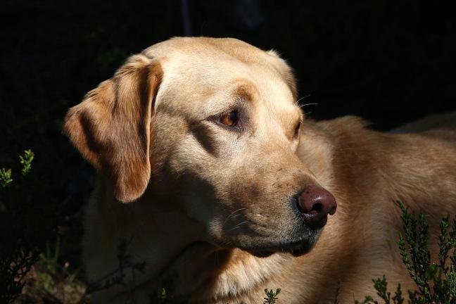 hundmässa, hund sälen, mässa sälen, jaktmässa, testa hund mot björn, björnpermobil, PAW of Sweden, hundtillbehör, hund utställning, Jonas i Sälen, älghund, jämthund, fågelhund, gråhund, vorsther, pointer