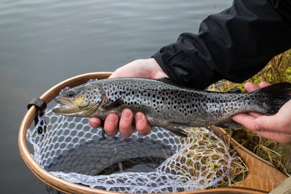 Fiskenyheter Sälen