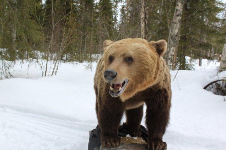 björn, hundtest, testa hund på björn, älg, testa hund på älg, permobilbjörn, permobilälg, Utbildningar Luleå, hund, jaktmässa, mässa sälen, Jonas i Sälen Game Fair, jaktmässa sälen