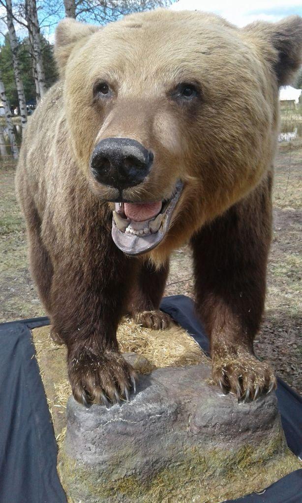 björn, björnjakt, björnpermobil, älg, älgjakt, testa din hund, arbetande hundar, jaktmässa sälen, hund mässa, hundar, utbildningar luleå, lennart forsberg, rädda jakten, mässa sälen, jonas i sälen game fair