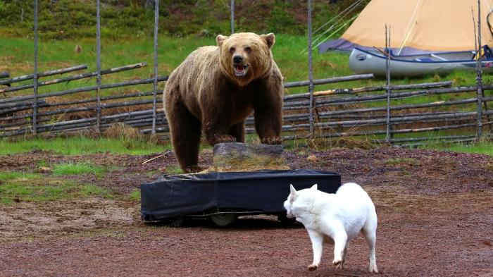 Jonas i Sälen Game Fair, Outdoor Summer Market, outdoor sälen, björn, hundprov, testa hund, älg, flugfiske, flugbindare, flugfiskemässa, fiskemässa, jaktmässa, hund, hundklubb, biking dalarna, kanot, klätring, fjällöpning, trail, sälen, lindvallens fäbod, dalarna, gamefair