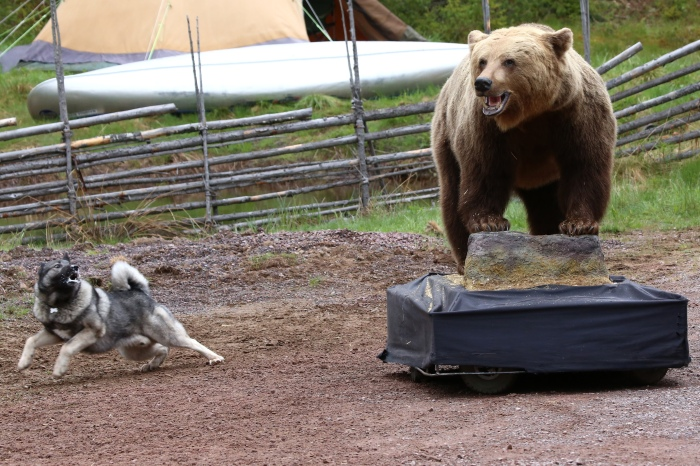 Rädda jakten, jakthund, jaga med hund, björn, älg, jaktmässa sälen, jonas i sälen game fair, björnpermobil, älghund, laika