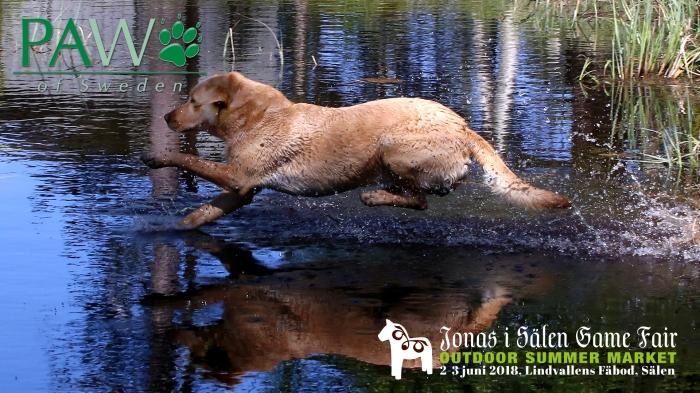 Paw of Sweden, hundtillbehör, jakttillbehör, hund, hundar, jakthundar, Jonas i Sälen Game Fair, jaktmässa, jaktmässa sälen, flatcoated retriever, fågellhund, jaga med hund, kvinnor och jakt, kvinnliga jägare, jakt, Sälen