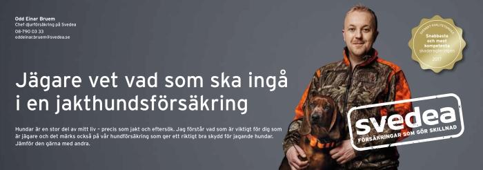hund, hundar, jakthund, jämthund, älghund, basset, stövare, hamiltonstövare, jaga med hund, jaktmässa, jaktmässa sälen, draghundar, hundprov, hundprov på björn, hundprov på älg, flatcoated retriever, dog, Vorsthe, fågelhund, Sälen, gamefair sälen, hundmässa, träning, Jonas i Sälen Game Fair, Svedea, Svedea försäkringar,