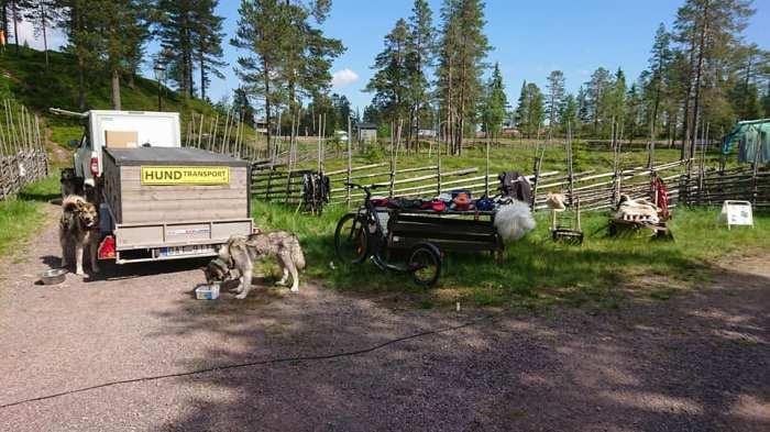 Sälen Hund och aktivitet, draghundar, hundspann, Jonas i Sälen Game Fair, outdoor summer market, hundar, hund sälen,